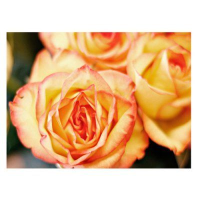 Roses Canvas Art by Ariane Moshayedi - AM0013-C3047GG | Canvas Wall ...