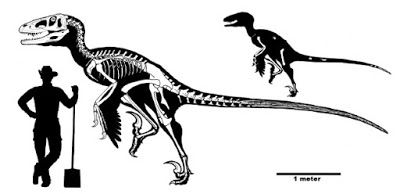 PALAEOBLOG: Dakotaraptor steini, Giant Raptor From The Hell Creek Formation