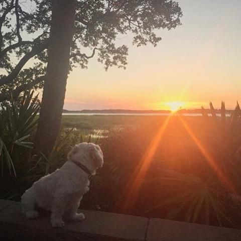 Island Time Pet Friendly Vacations Pet Friendly Beach Hilton Head Island