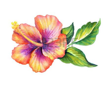 dessin fleurs exotiques: hibiscus flowerl aquarelle illustration
