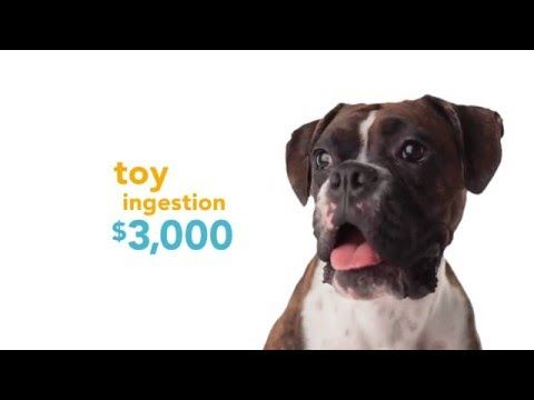 Petplan Video Chunk Hey Pet Insurance Coverage Goodbye Vet