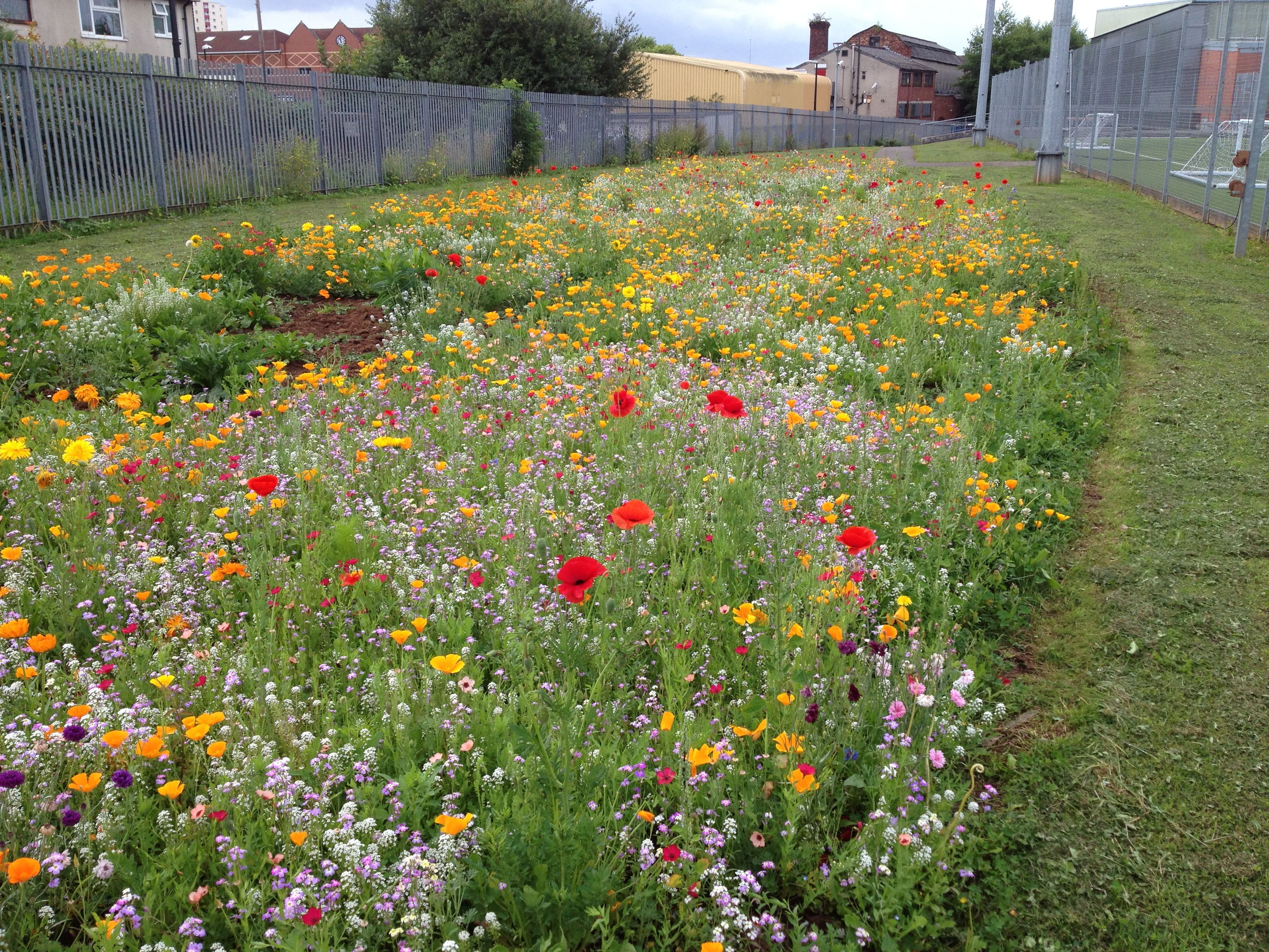 what about a wildflower meadow  like the urban pollinators project is creating in cities across