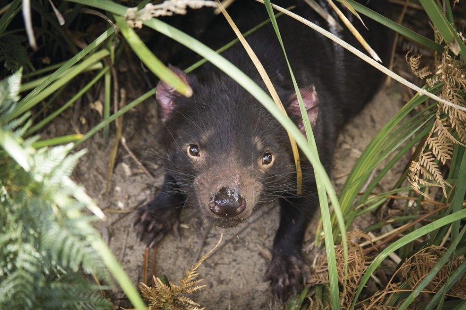 Best places to see Australian Animals Australian animals