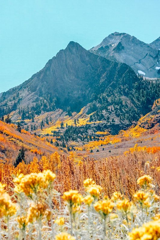 Stunning fall foliage climbing the flanks of McGee Creek Canyon in the Eastern Sierra Nevadas.