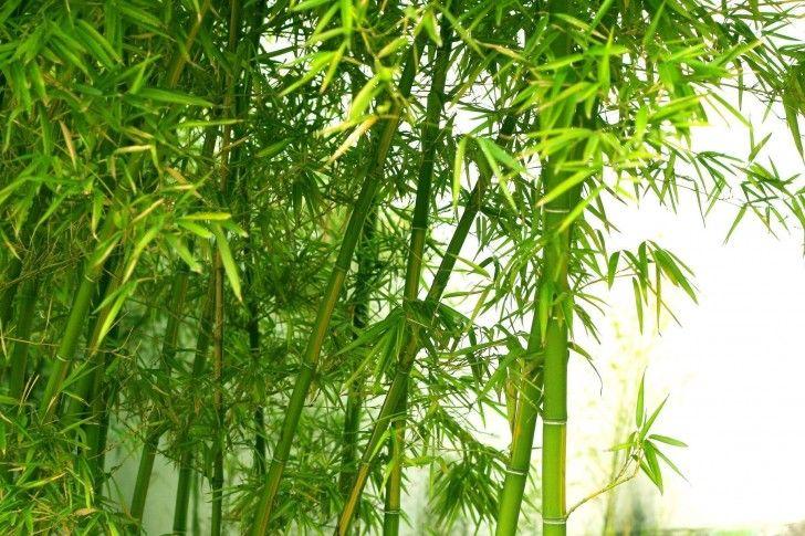 Green Bamboo Wallpaper Green Fresh Bamboo My Wallpapers