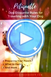 101 Dog Etiquette Rules to Follow with Your Pup Are you one of those people that finds it easy to talking to your dog Do you regularly find yourself talking to your anima...