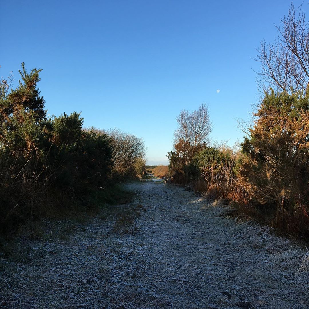 What Lovely Walk Rural Nature Ireland Green West Peace Quiet Galway Walking Cycling Climbing Painting Roscommon Pets Rescue Animals Photogr Pet Health Animal Photography Nature