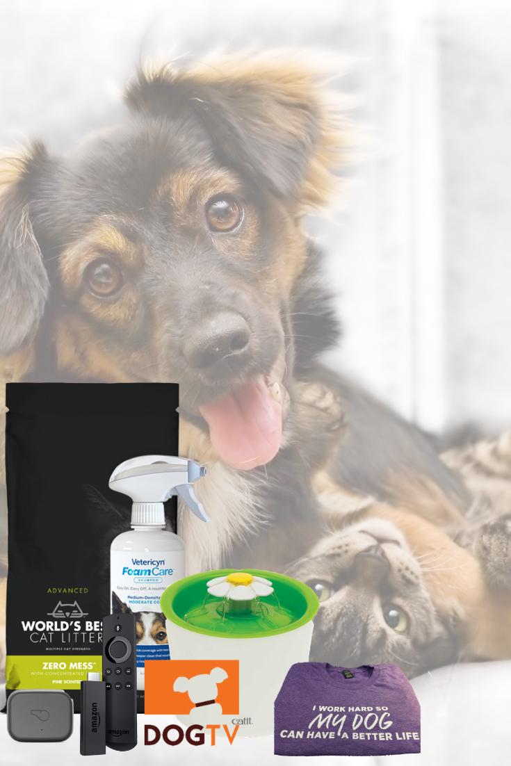 Crazy Cat Ladies Enter To Win Embrace Pet Insurance Cheap Pet Insurance Animal Medicine