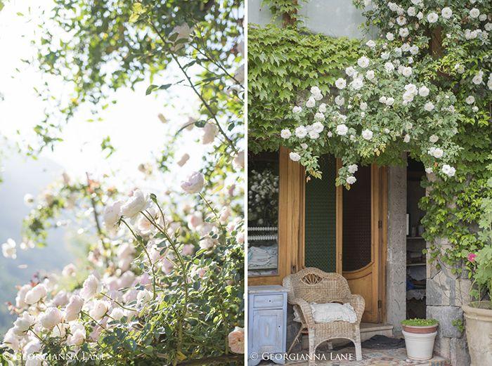 Mon Jardin Et Ma Maison Rose At The Chilean Home Of Maria Cecilia