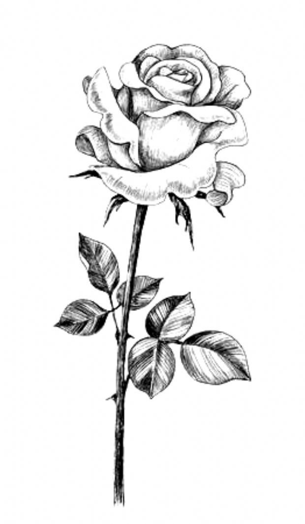 50 Easy Flower Pencil Drawings For Inspiration Beautiful Flower Drawings Pencil Drawings Of Flowers Tattoo Designs