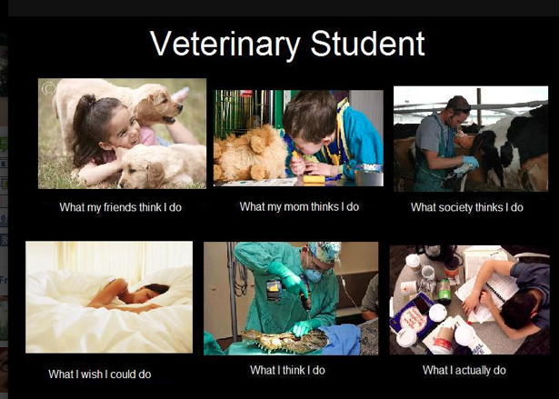 Then it's off to vet school for the day, where the dress