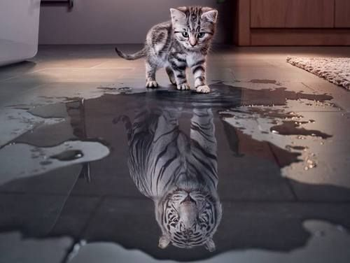 Imagen de tiger, cat, and animal