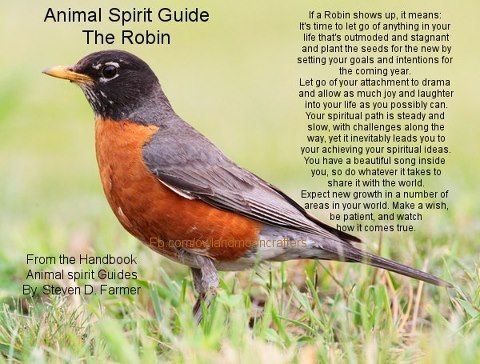 If a Robin shows up, it means: It's time to let go of