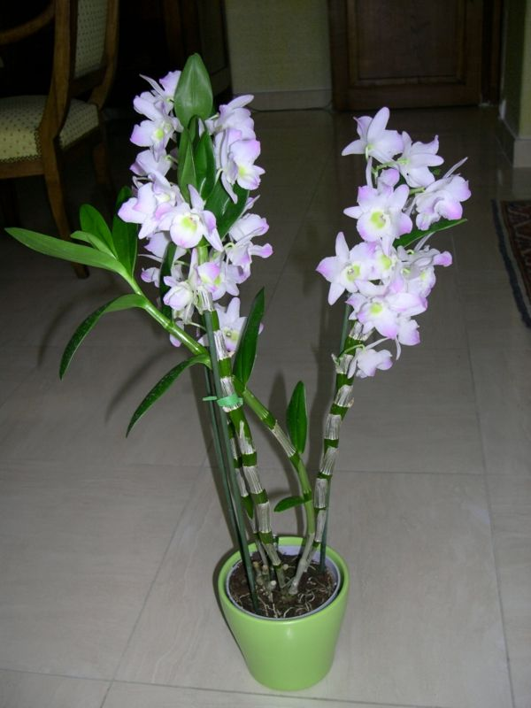Orchideen Pflegen Und Reiche Schone Bluten Zu Hause Bewundern