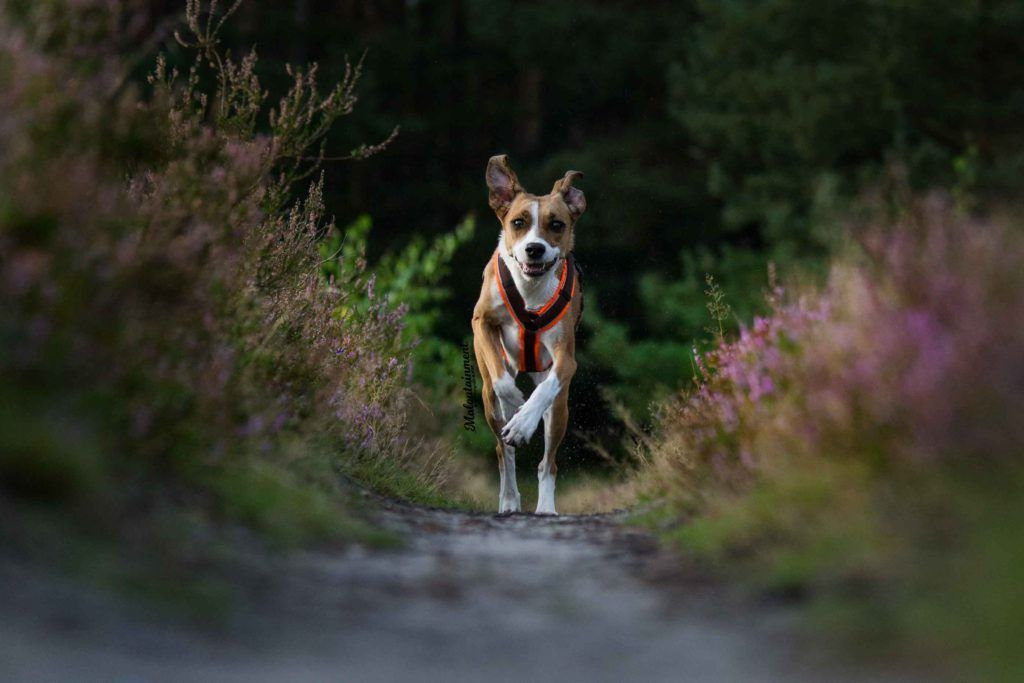 Beispiel Hundeshooting Fotografie, Hundefotografie und