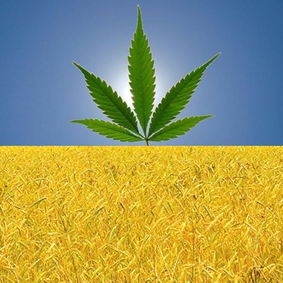Pin On Legalize Cannabis Ukraine