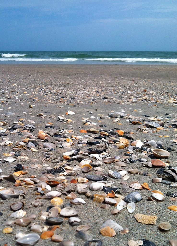 Sea Shells in the sand! It's fun to collect shells during ...