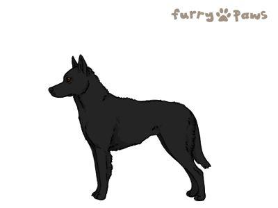 Furry Paws // GCH Kip's Furious Guardian [Lla 1STM 8HH 1hh 1.350] *BoB*'s Kennel