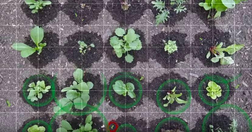 Cuando el cultivo urbano rompe con la tradición. El ejemplo de automatización de la huerta urbana en los cultivos urbanos de las ciudades del futuro.  #agricultura #urbana #huerto #huerta