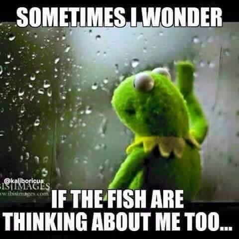 Funny fish memes - photo#41
