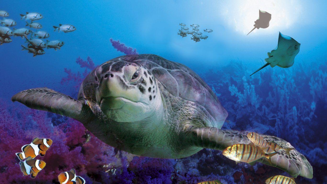Tortuga marina wallpapers buscar con google tortugas for Buscar fondos de escritorio