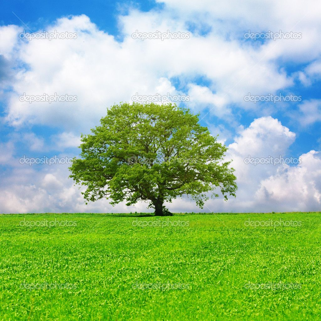 Single Tree And Cloudy Blue Sky 草原 イラスト 美しい風景 風景