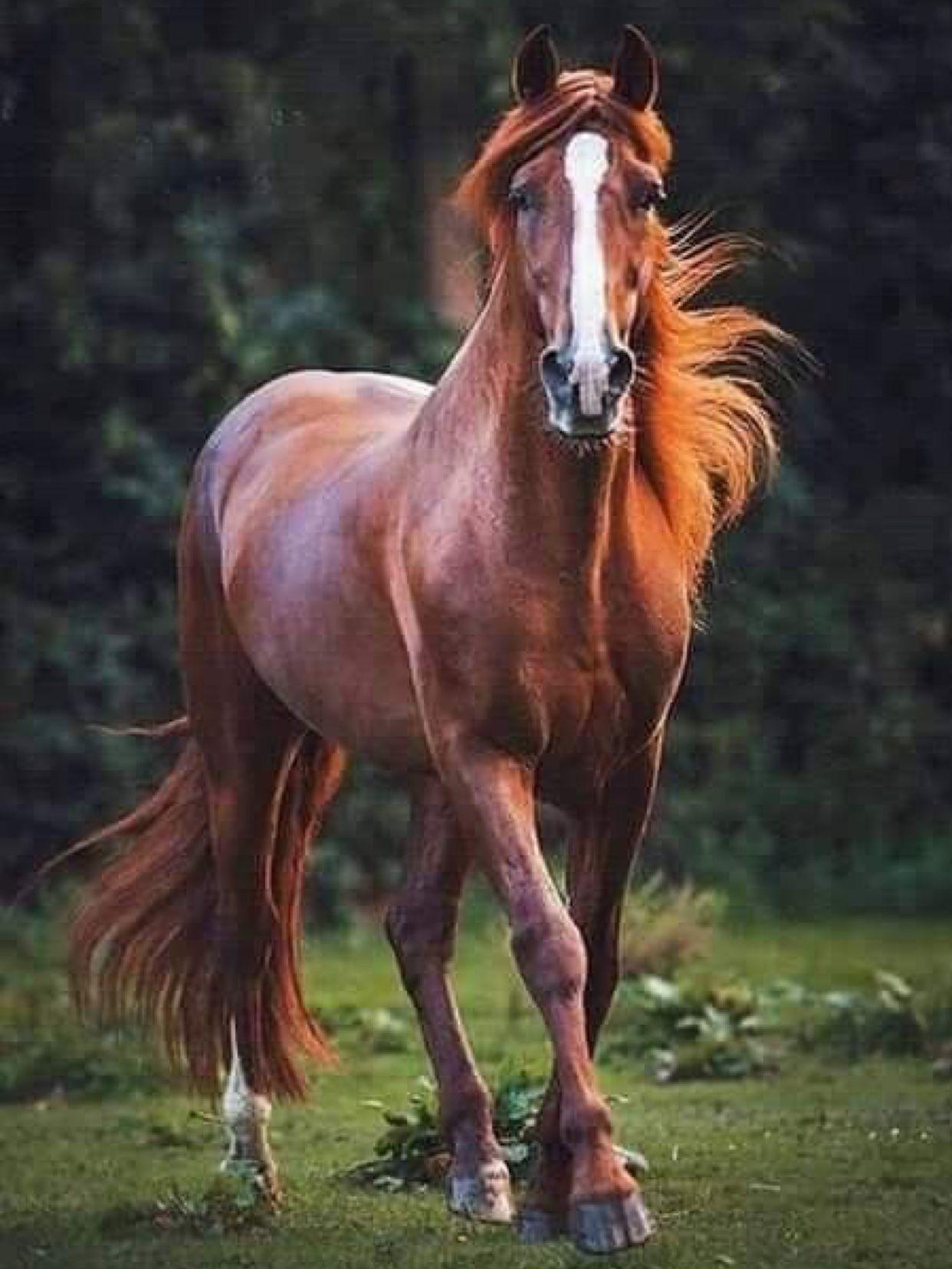 馬 イラスト かっこいい 625388-かっこいい リアル 馬 イラスト