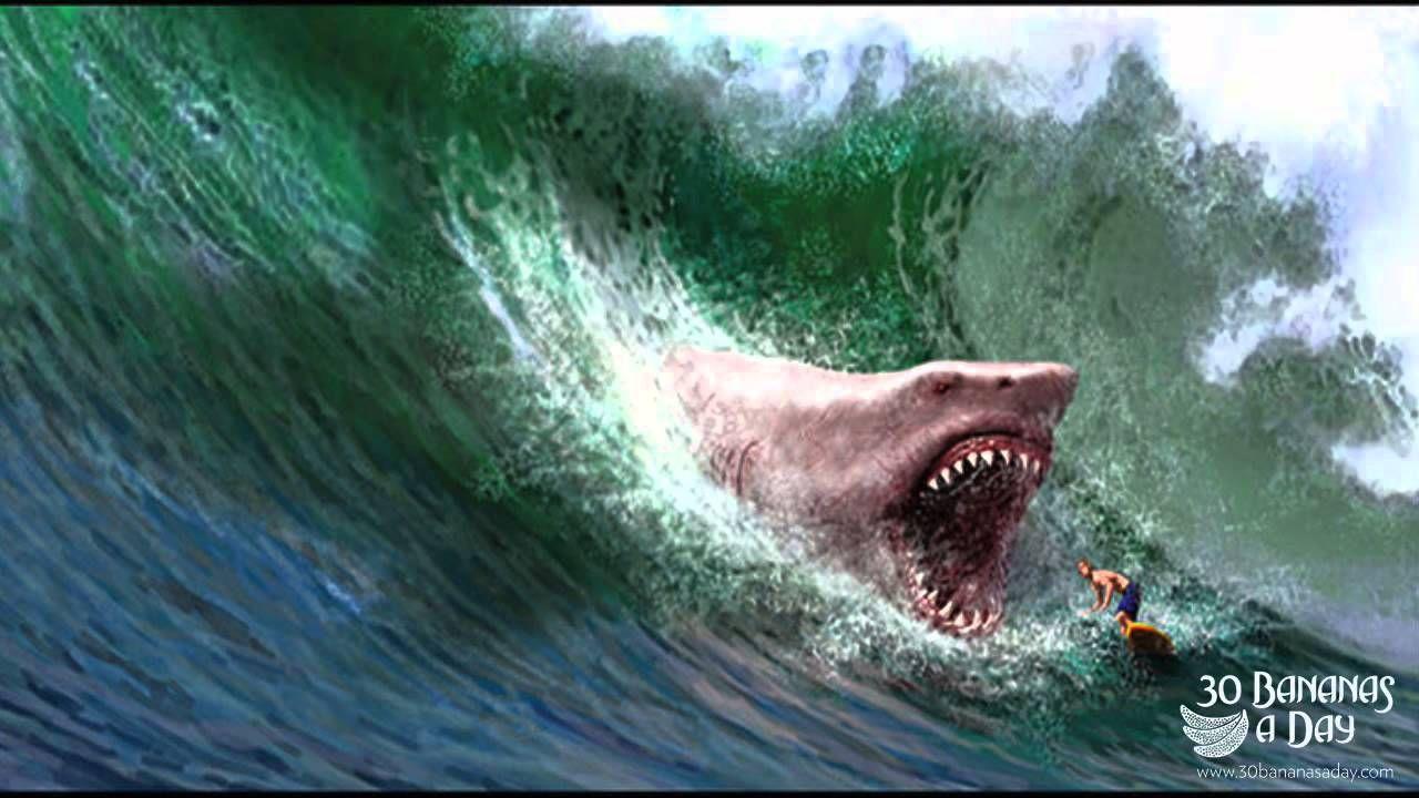 megalodon shark the food chain pinterest megalodon shark