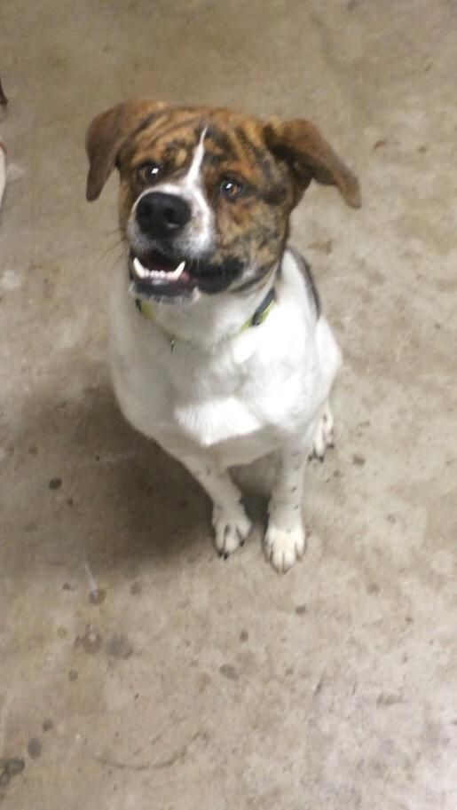 Adopt Norman On Pet Search Pet Adoption Pets