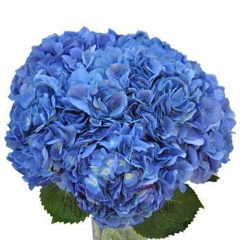 Hydrangea Dark Blue Flower Fiftyflowers Com Dark Blue Hydrangea Blue Hydrangea Blue Wedding Flowers
