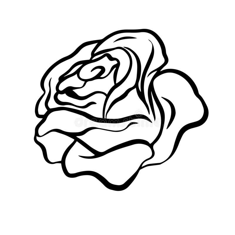 Doodle Sketch Rose Flower Bud Illustration On White Background Vector Illustration Doodle Sketch Rose Sketch Flower Bud