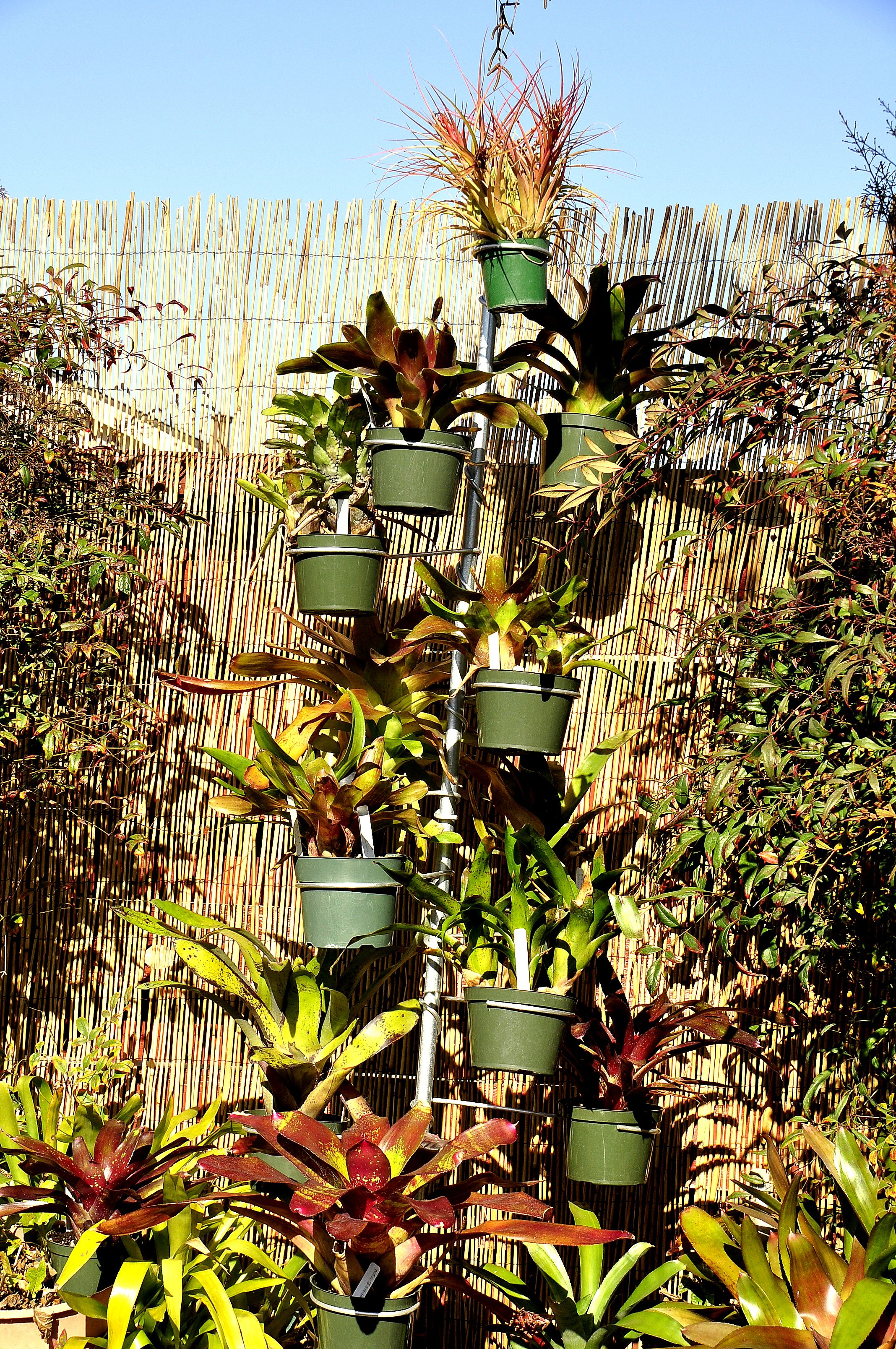 Check Out How To Make Your Back Yard Look More Tropical Using The Stand Alone Pole