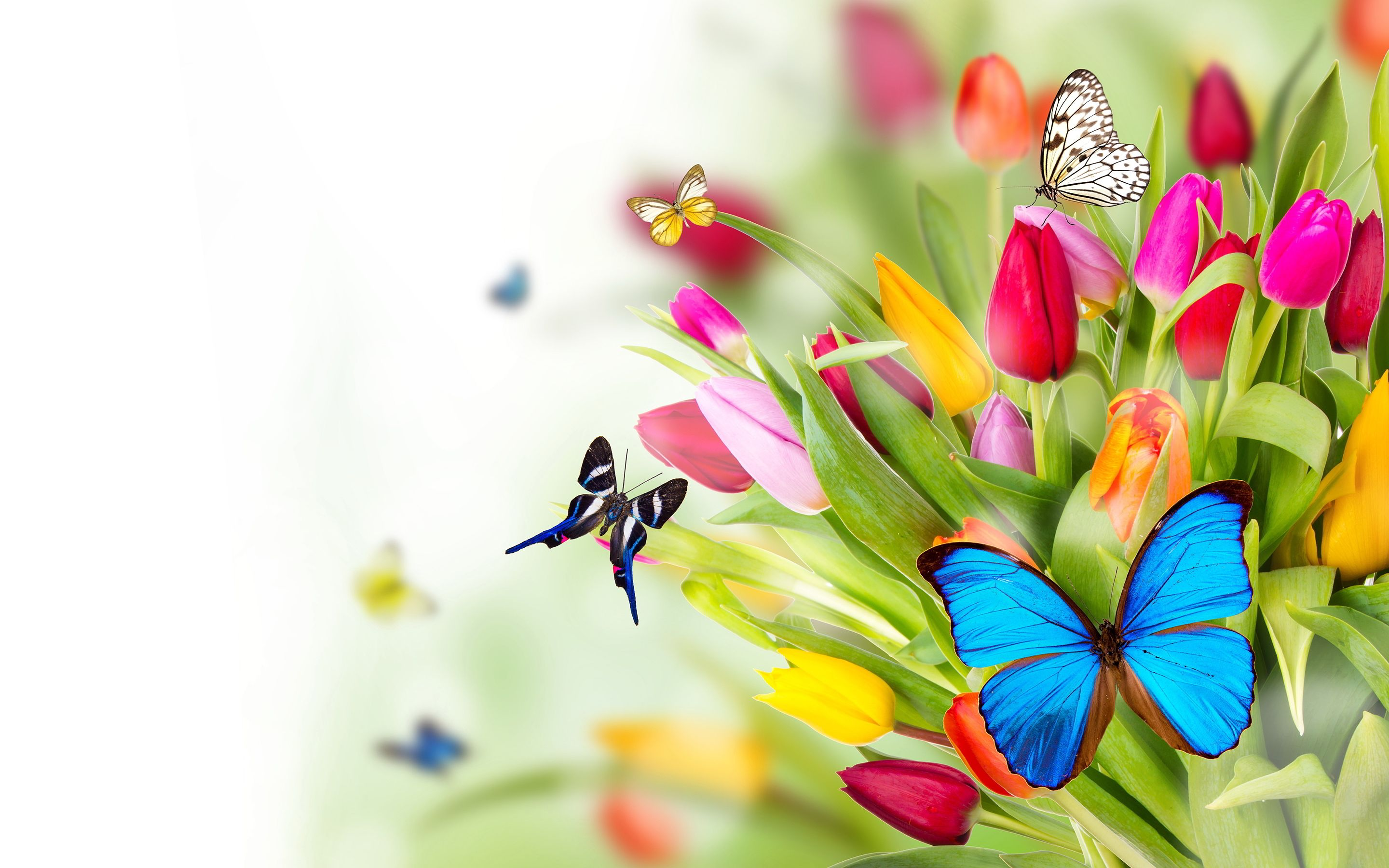 Flowers Butterflies Wallpapers Pictures Photos Images