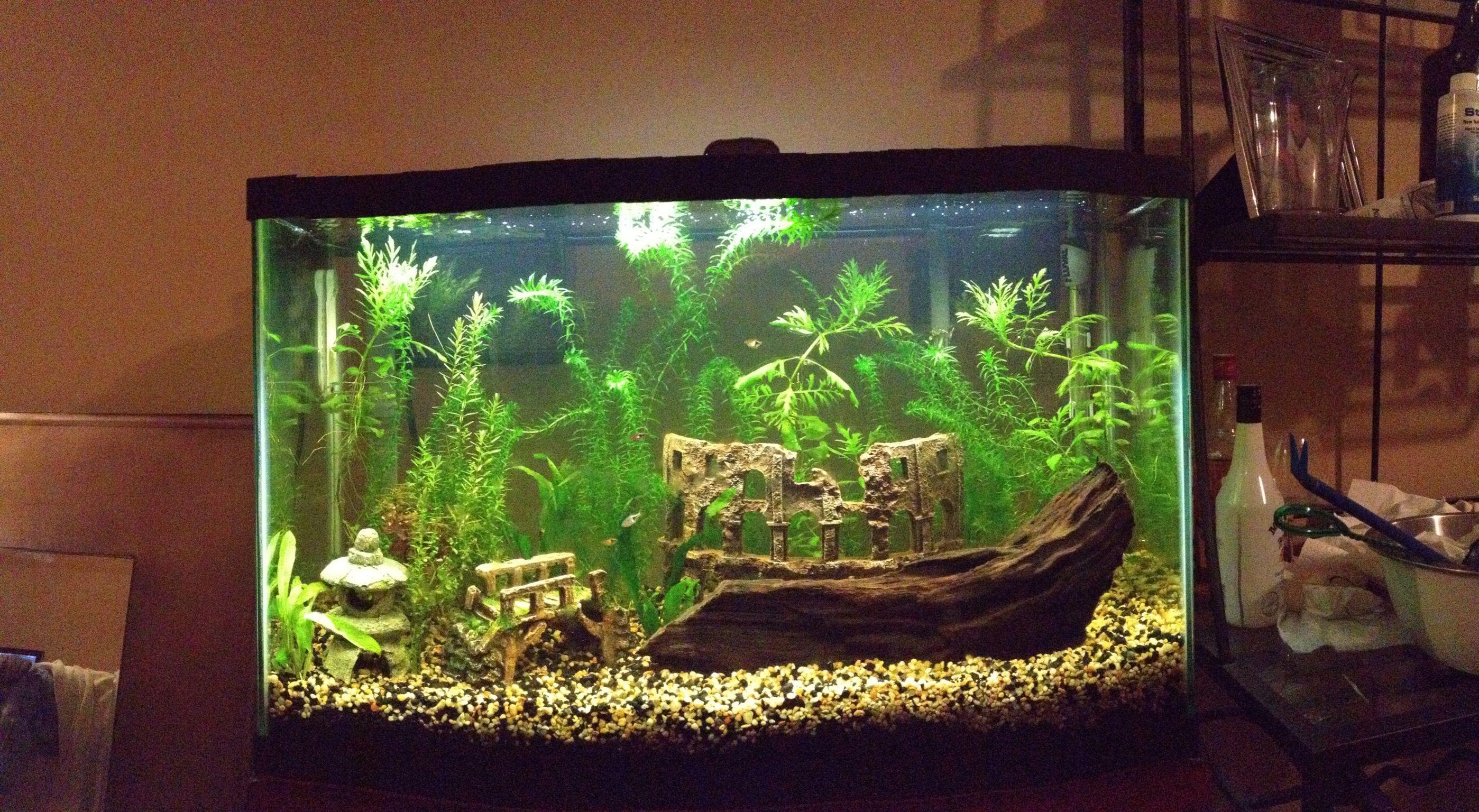 430bbe17a1912e8afee67b854b793d86 Frais De Aquarium Tropical Schème