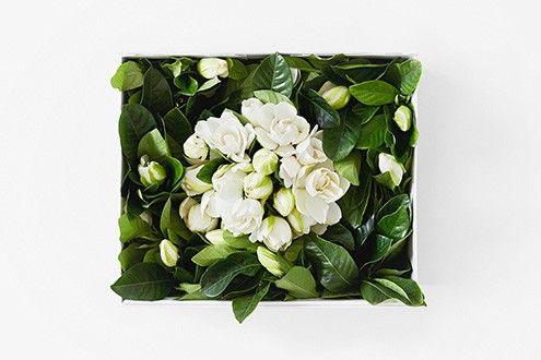 Deluxe Vine Bloom Box 50 Gardenias Flower Boxes Flower Delivery Luxury Flowers