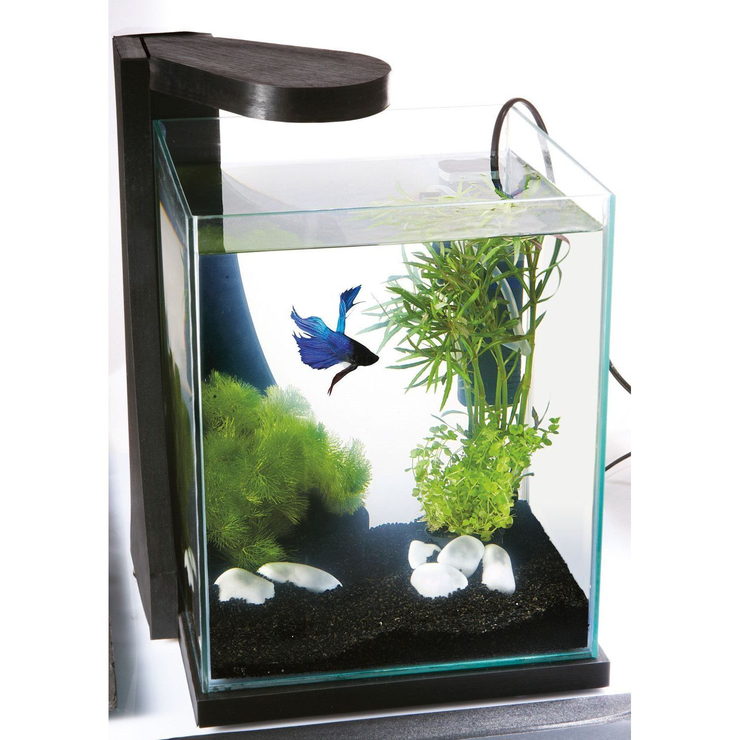 Nano aquarium google pinterest for Decoration zen aquarium