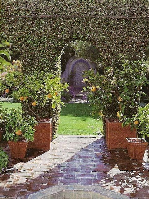 Eye For Design: The Old World Charm Of Potted Citrus Trees.
