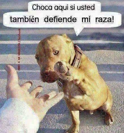 Si Nosotros Los Humanos Somos El Peligro Para Ustedes No Ustedes Para Nosotros Perros Frases Animales Frases Perros Tristes