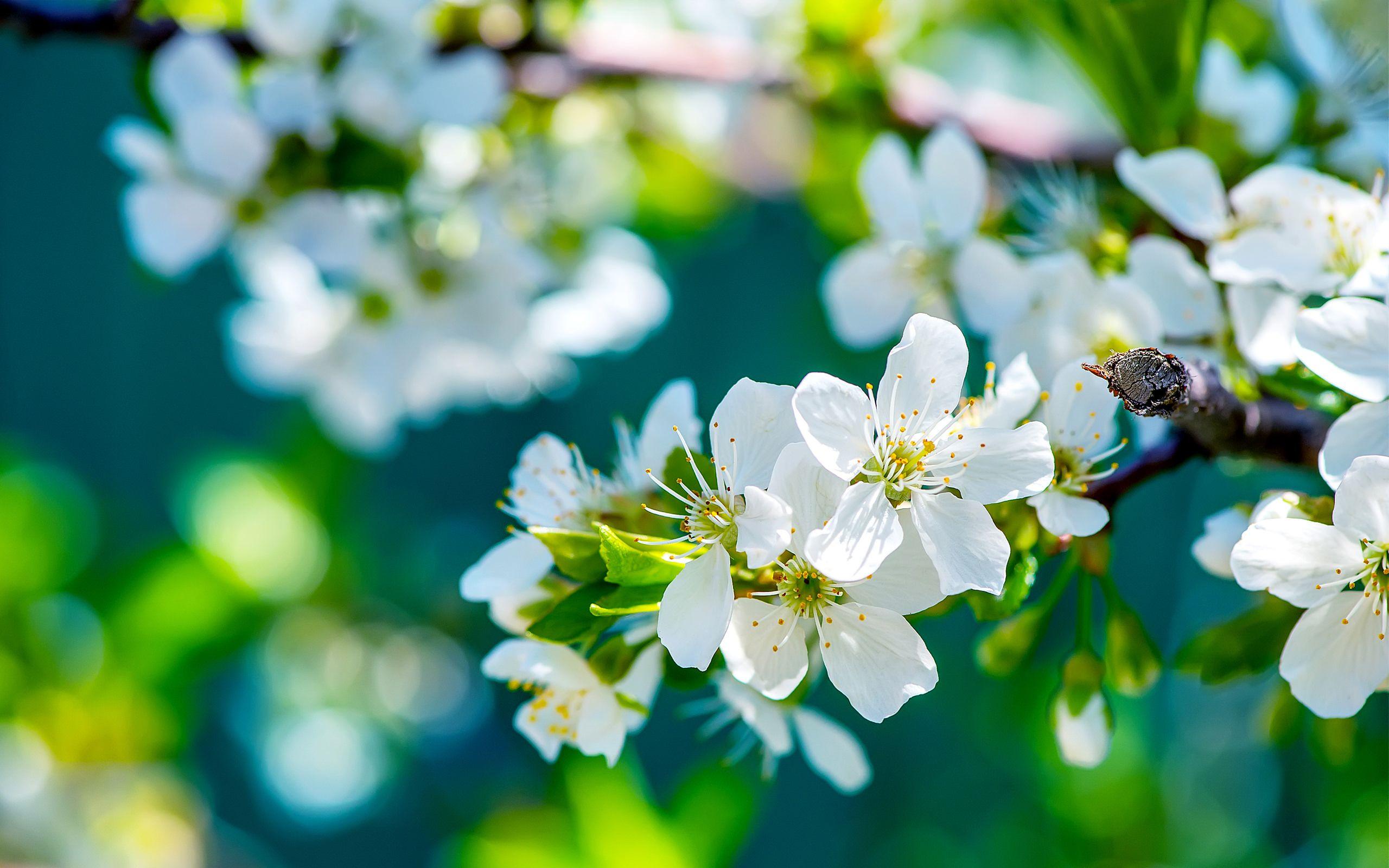 Beautiful Flowers Wallpaper D Hd Blue