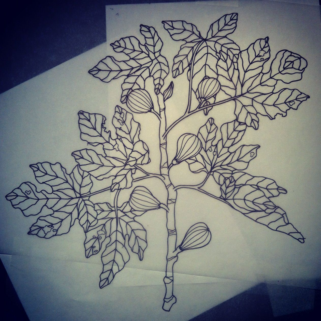 Tree Tattoo Meaning, Fig Tree, Leaf Drawing