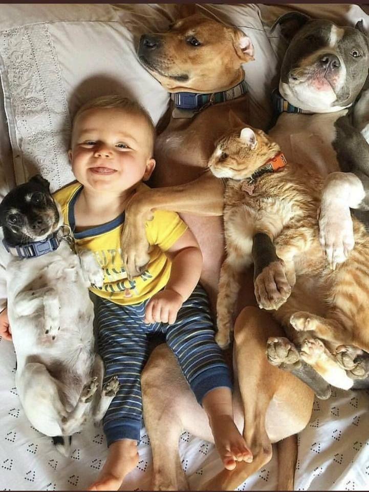L'image contient peutêtre 1 personne, chien Animals