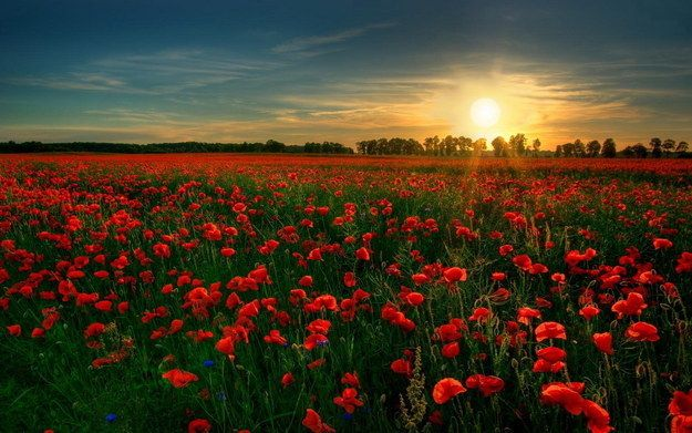16 Absolutely Stunning Places To See In Your Lifetime Field Wallpaper Beautiful Flowers Garden Beautiful Flowers Wallpapers Wallpaper images wallpaper garden photos