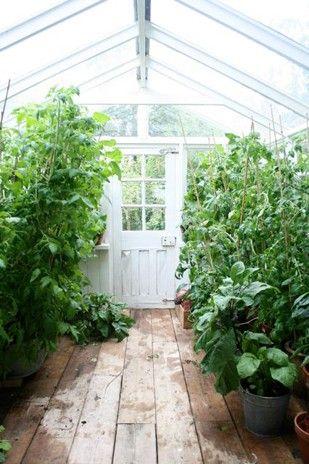 ⭐Atrium - Verrière - Jardin d\'intérieur - Greenhouse ...