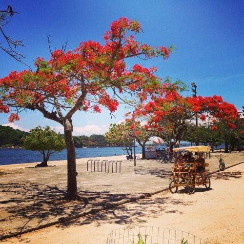 isabellemkpinkworld:  Ilha de Paquetá RJ