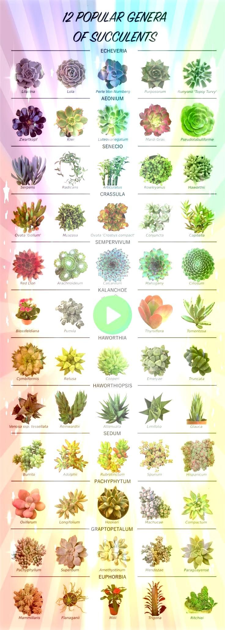 genre of succulentsPopular genre of succulents Want to learn how to propagate succulents successfully  TOP QUALITY  Our succulents are hand picked from our selection base...