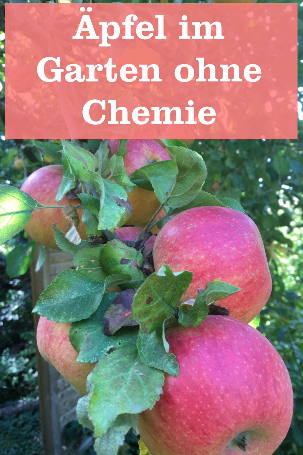 Apfel Ohne Chemie Gartenbob De Der Garten Ratgeber Obstgeholze Pflanzen Garten
