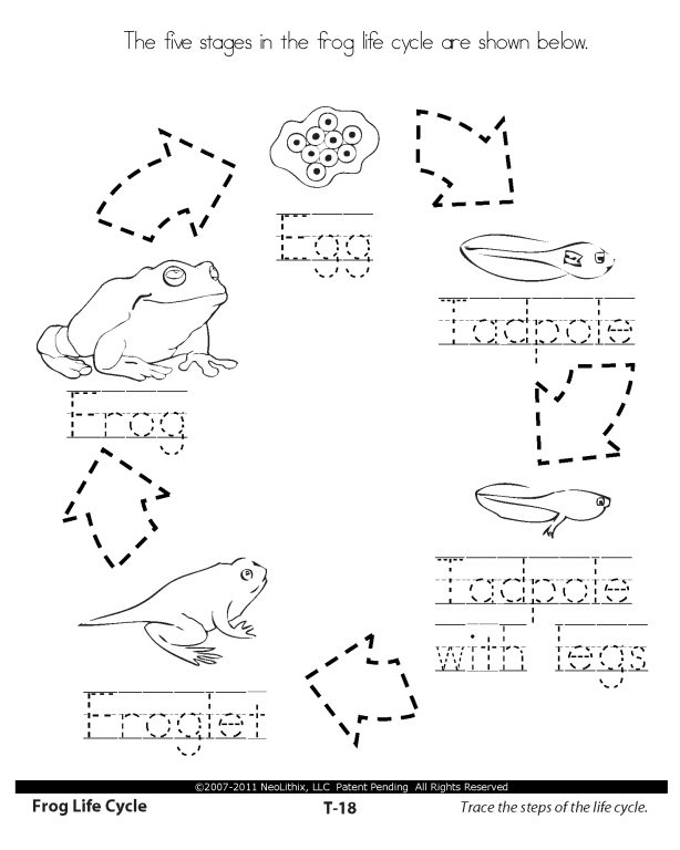 life cycle worksheets 1st Grade Science Stages in the
