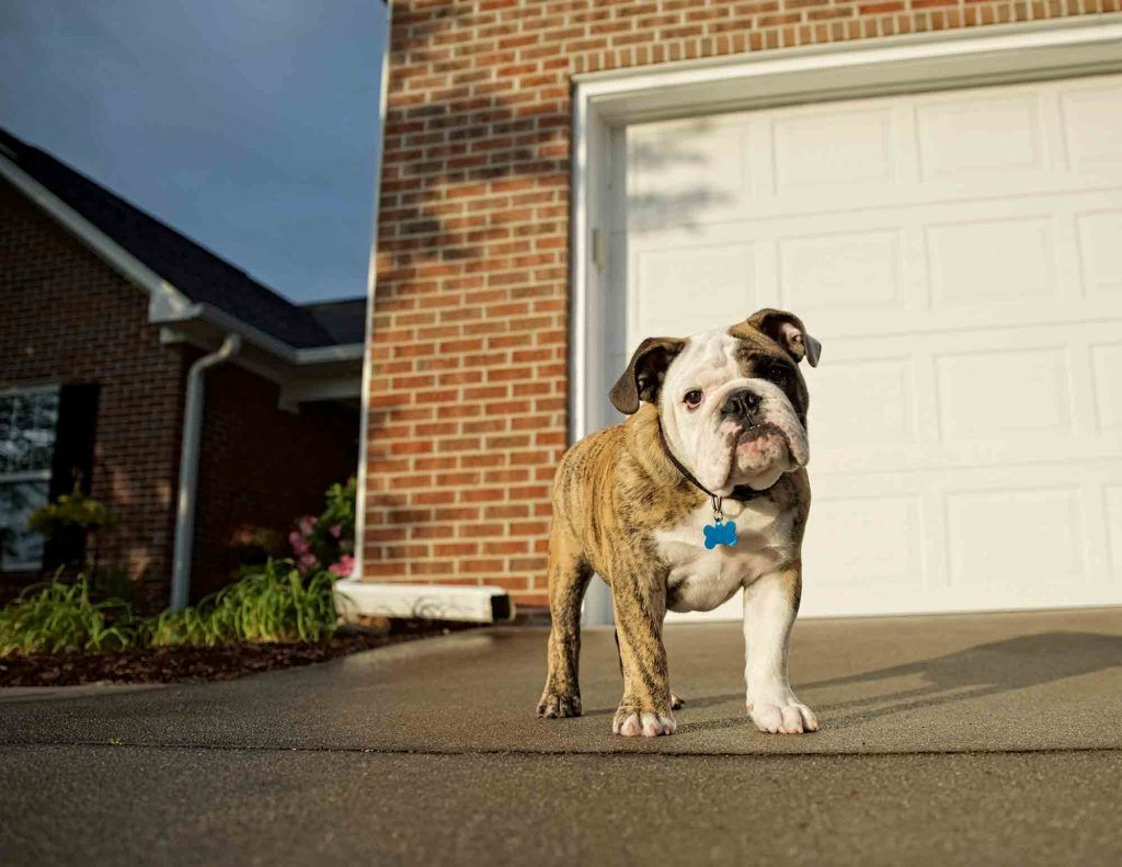 Protecting Your Pet from Antifreeze Poisoning Dogs, Dog