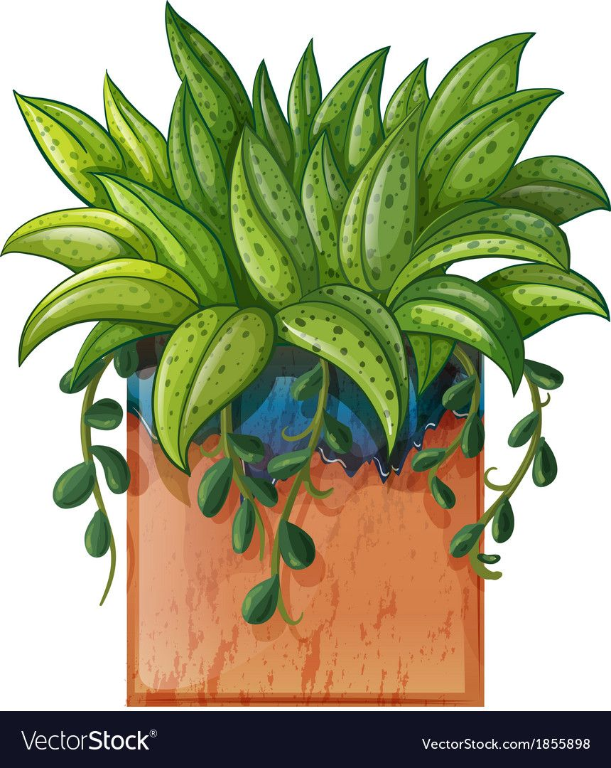 A Potted Plant Vector Image On Vectorstock Plants Plant Illustration Beautiful Flowers