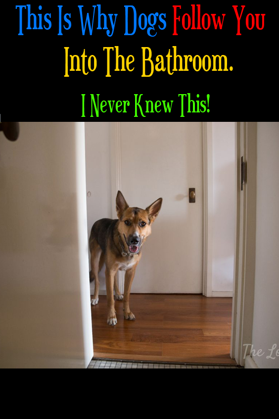 This Is Why Dogs Follow You Into The Bathroom I Never Knew This In 2020 Dogs Puppy Dog Eyes Girls In Love